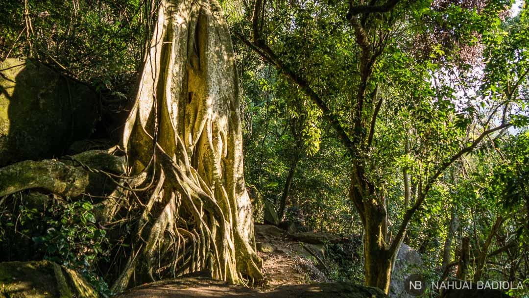 Ilha Grande-Ceiba