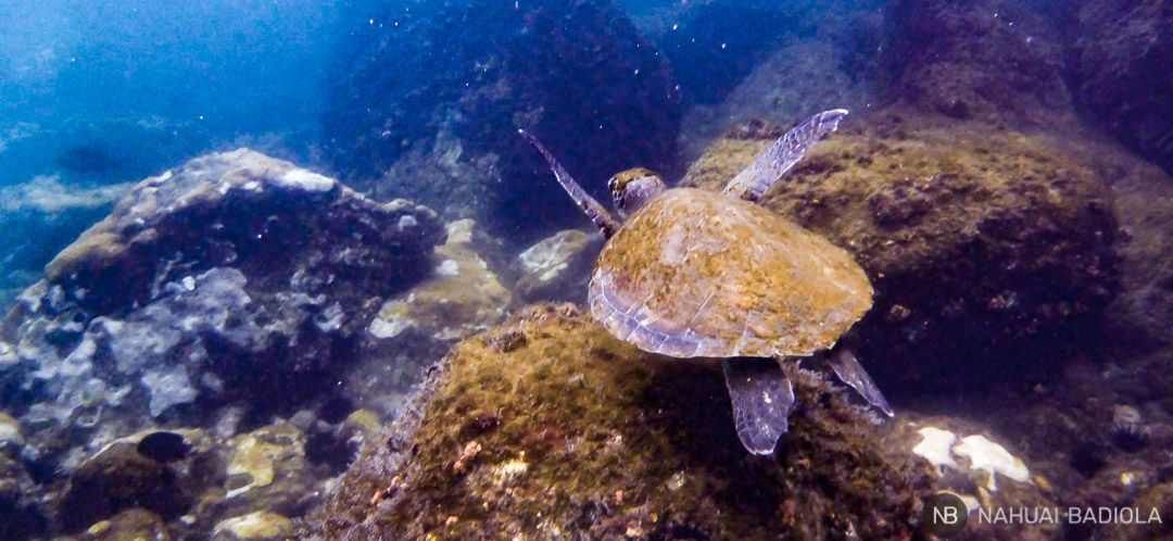 Ilha Grande-Tortuga