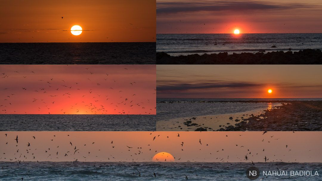 Mosaico Sunset - Lady Elliot Island