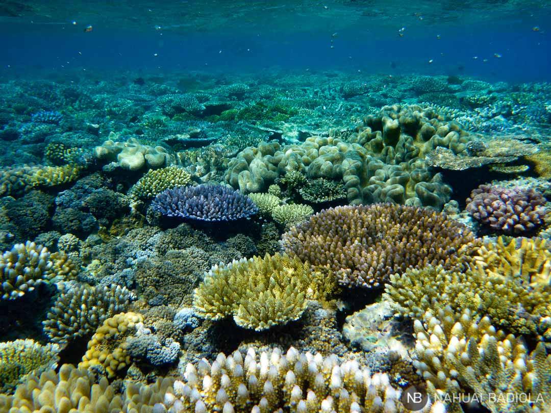 Moore reef cairns