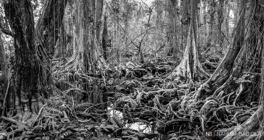 Parque Natural de Cahuita, Costa Rica