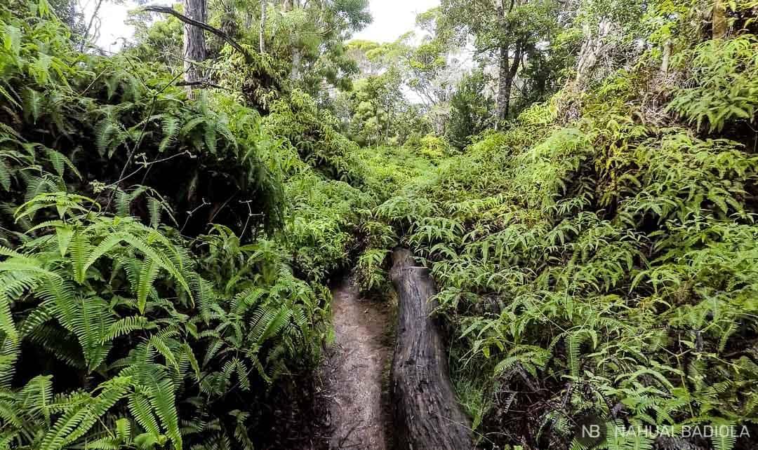 Camino Awaawapuhi, Kauai, Hawaii