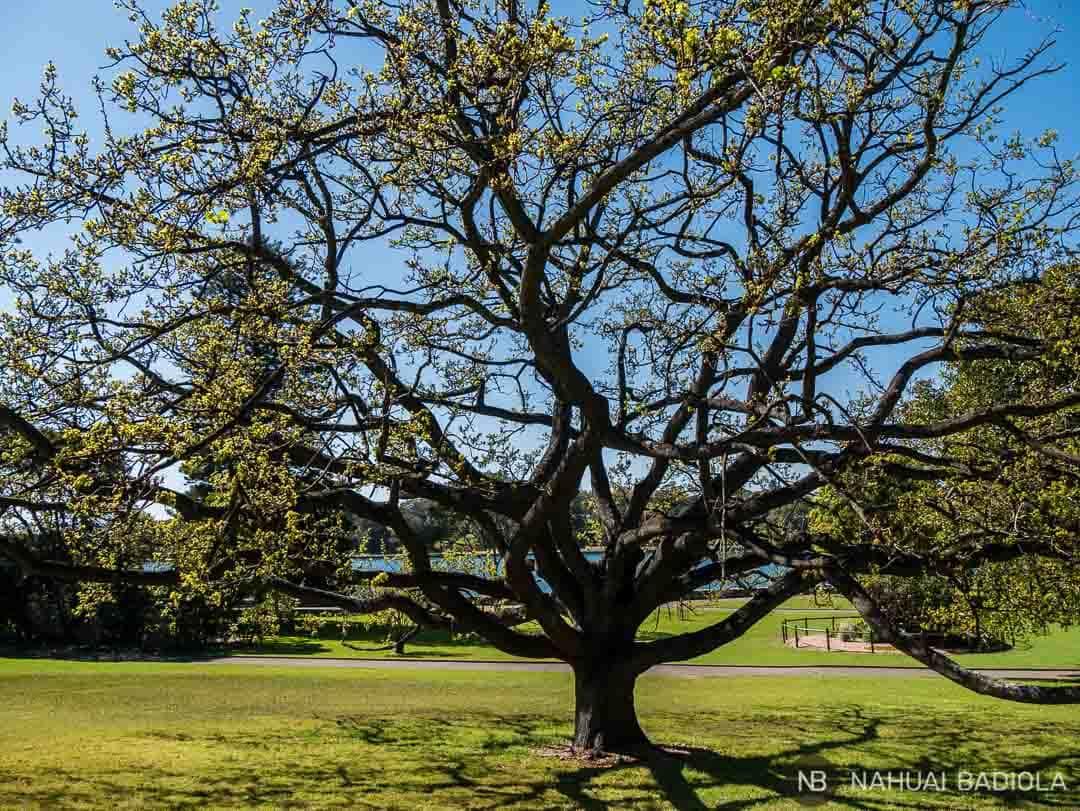 El jardin botanico de Sidney es un oasis natural en pleno centro de la ciudad