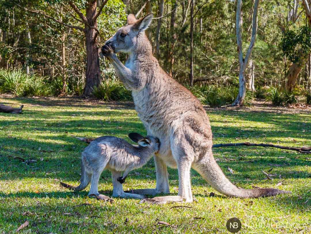 Mamá y bebé canguro