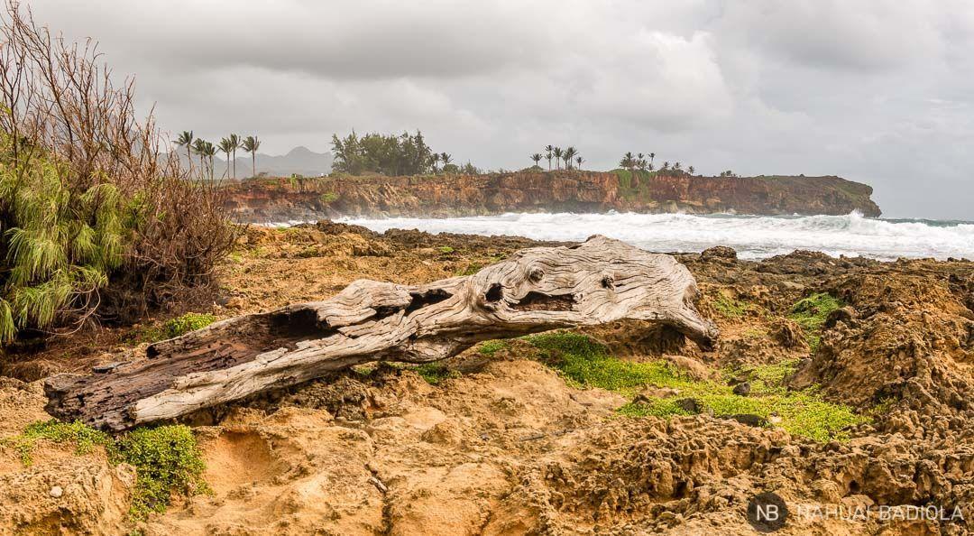 Un viejo tronco de árbol domina la imagen. Al fondo puede verse el precioso acantilado de la costa sur de Kauai. Foto tomada desde el Mahaulepu Heritage Trail. Hawaii