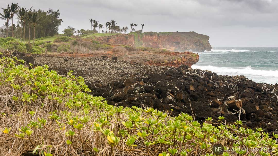 Templo ancestral hawaiano dedicado a la pesca caracterizado por una extensión de piedras volcánicas negras situadas unas junto a otras de forma premeditada. Puedes verlo a lo largo del Mahaulepu Heritage Trail, en Kauai.