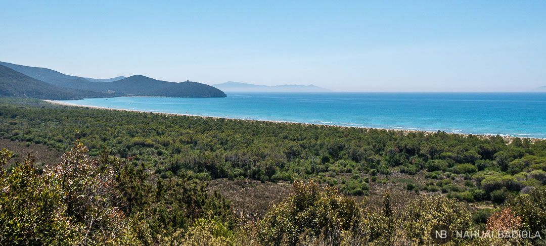 La preciosa playa virgen del parque de la Maremma con la cala del Forno al fondo. Toscana, Grosseto.