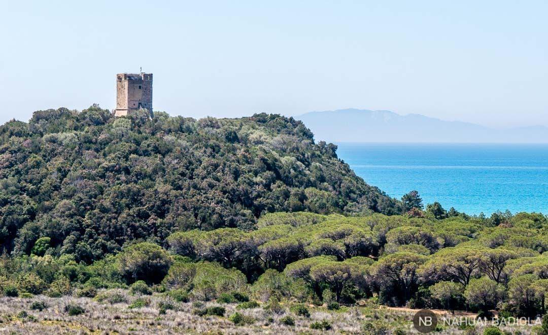Vistas de la torre Collelungo en el parque de la Maremma, Grosseto, Toscana