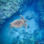 Las mejores playas de snorkeling al sur de Maui