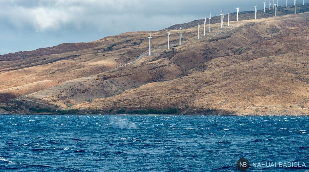 Una ballena expulsando aire junto a las costas de Maui.