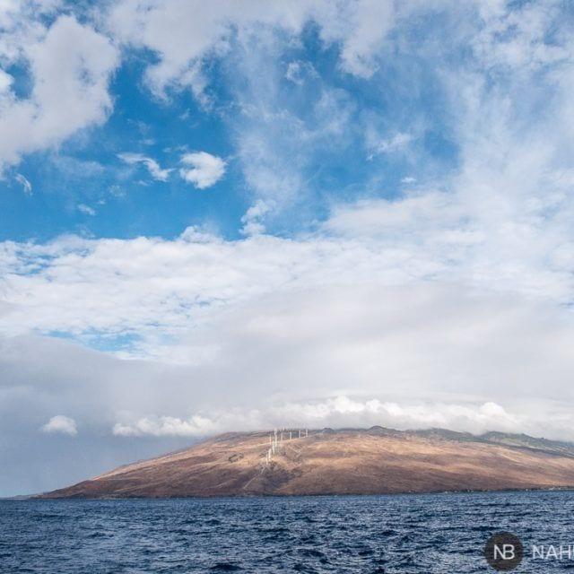 Ballenas jorobadas junto a las costas de Maui: avistamientos  garantizados