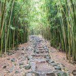 Descubre el Pipiwai Trail y las 7 piscinas sagradas de O'heo Gulch