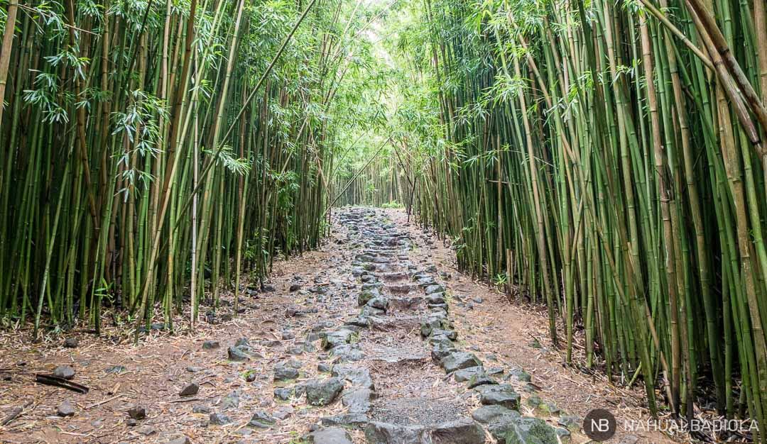 Senda de piedra atravesando en bosque de bambú al final del Pipiway Trail, Maui.