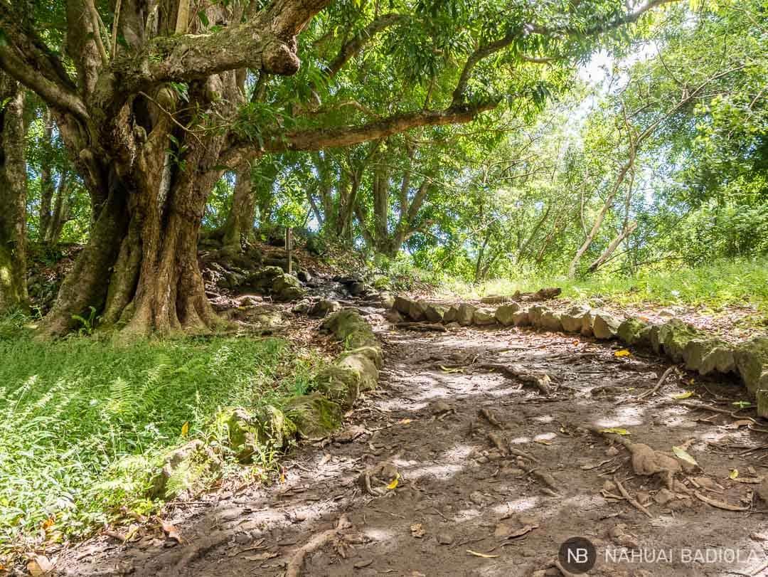 Sendero natural Pipiway Trail, Maui.