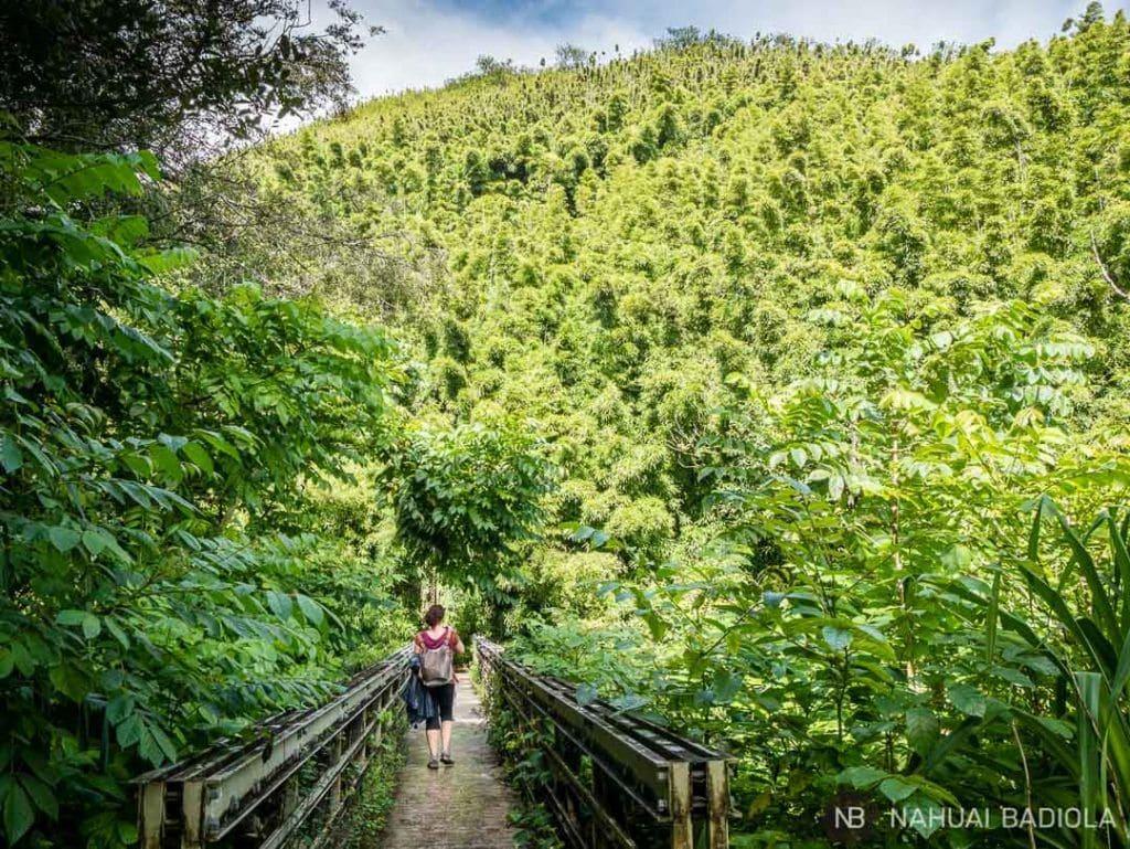 Puente hacia la selva de bambú en el Pipiway Trail, Maui.