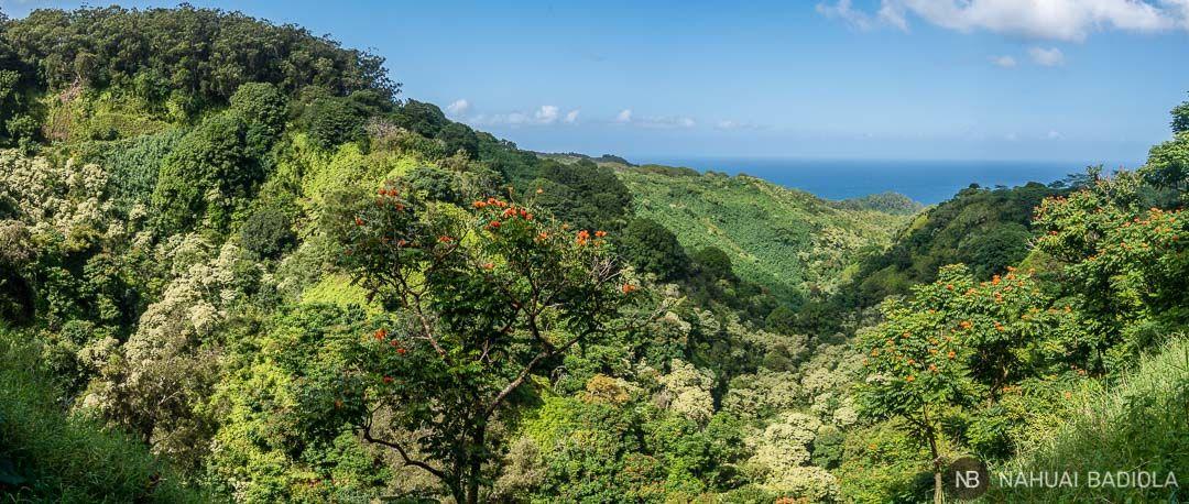 Vistas de la vegetación desde el Road to Hana, Maui.