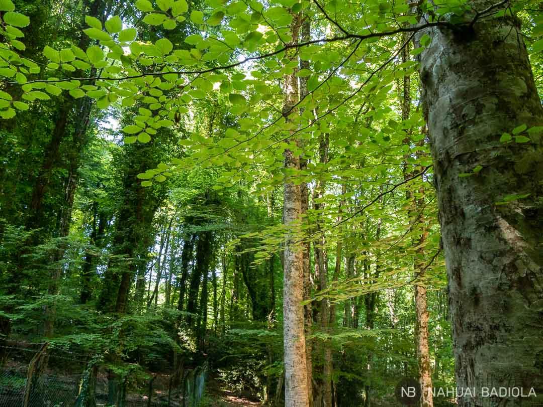 Caminando bajo la sombra de los árboles en el parque del Gargano.