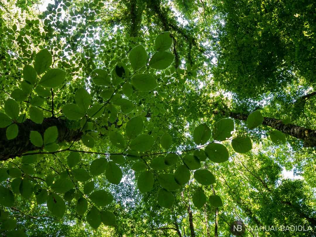 Techo verde en la foresta umbra de Gargano