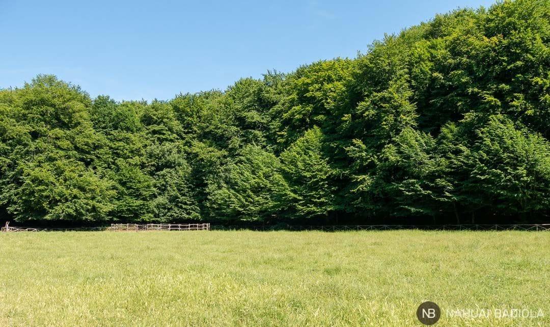 Campo abierto de hípica en la foresta umbra, Gargano