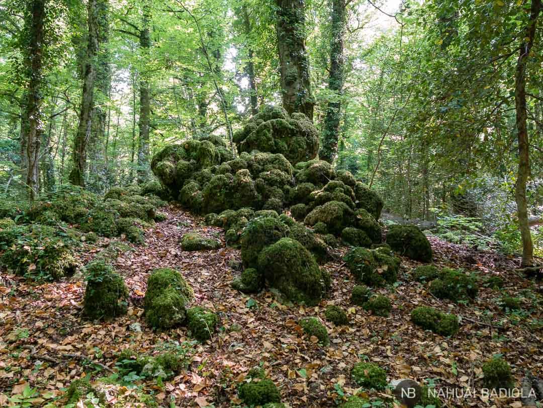 Piedras recubiertas de musgo en la foresta umbra de Gargano.