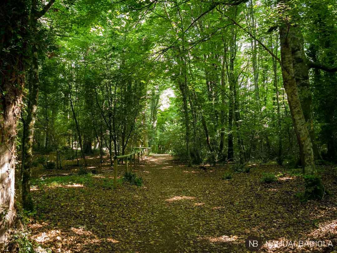 Uno de los muchos senderos que recorren la foresta umbra, en Gargano, Italia.