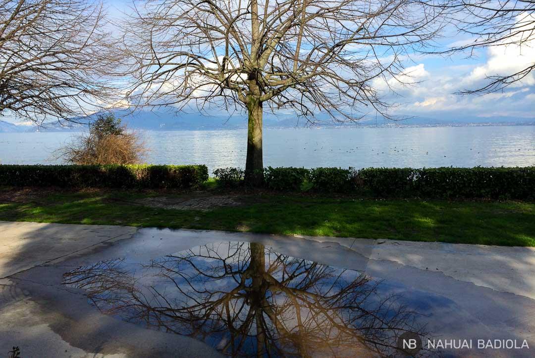 Reflejo de un árbol en el paseo junto al Lago de Garda.