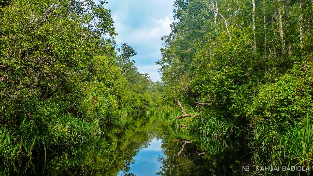 Surcando el parque de Tangjung Puting en klotok (Borneo).
