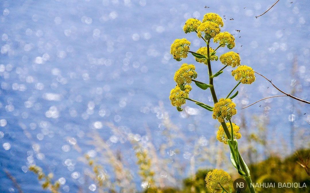 Flor e insectos en la reserva del Zíngaro, Sicilia.