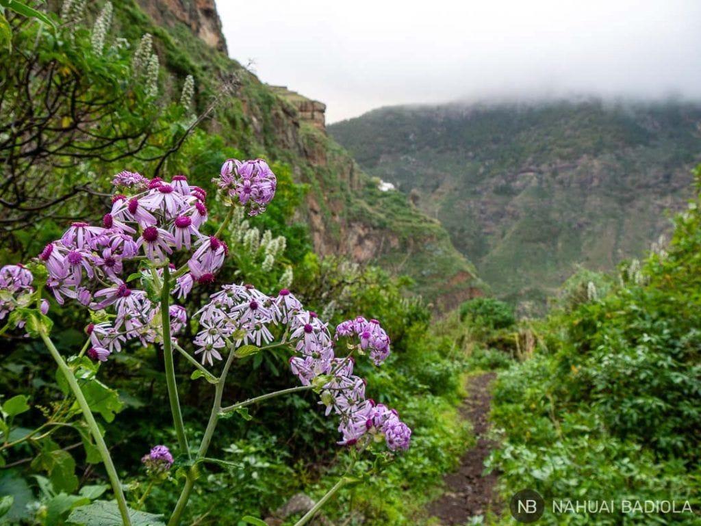 Flores en el sendero del Barranco del Sao, Gran Canaria.