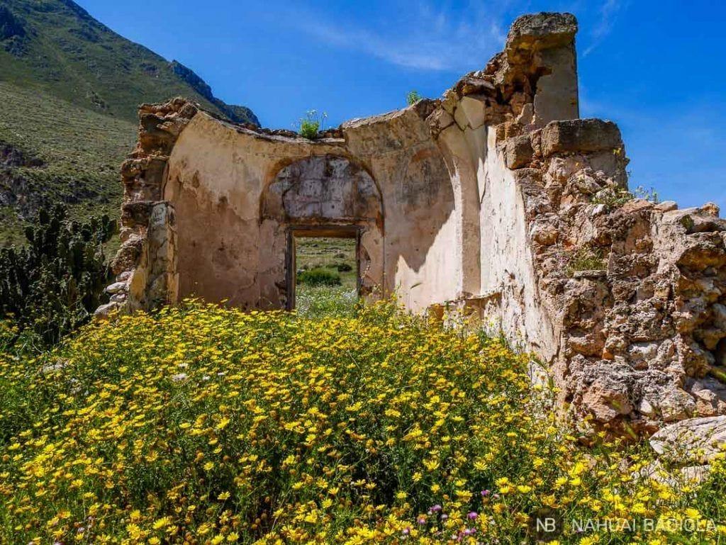 Ruinas en flor junto a la Tonnara de Monte Cofano, Sicilia