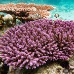 Pulau Derawan: cómo llegar y quedarte 7 días en la isla