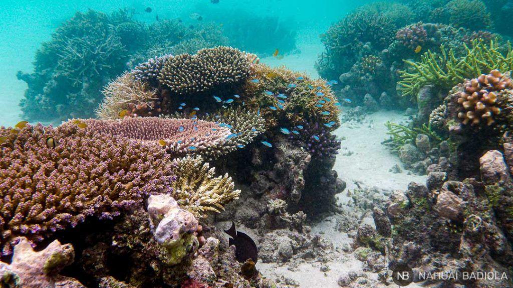 Arrecifes de coral en Derawan, Indonesia