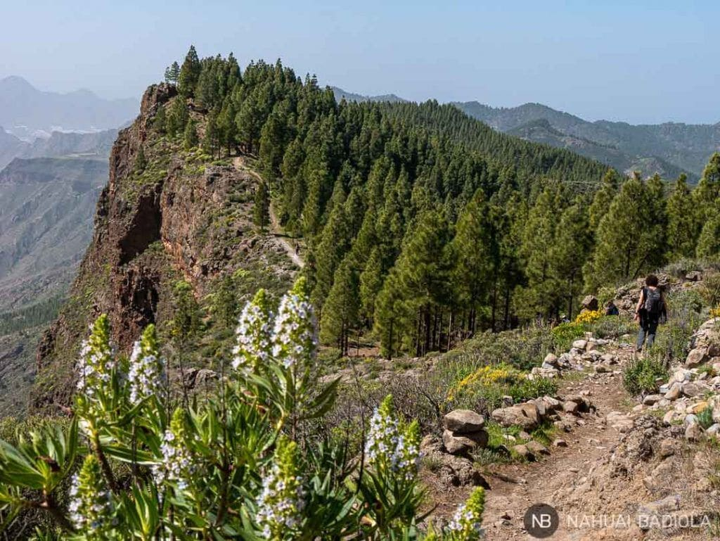Detalle del camino que bordea el acantilado sobre Artenara hasta la cueva de los Candiles