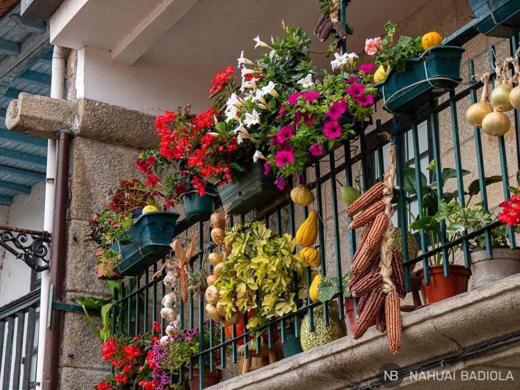 Terraza florida en Combarro