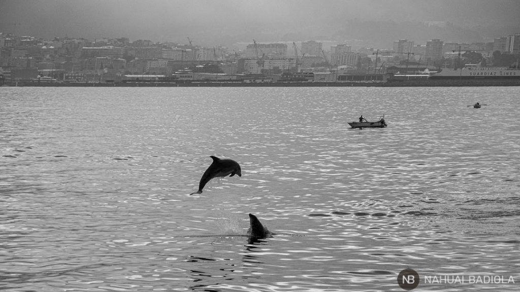Avistamiento de delfines en la ría de Pontevedra