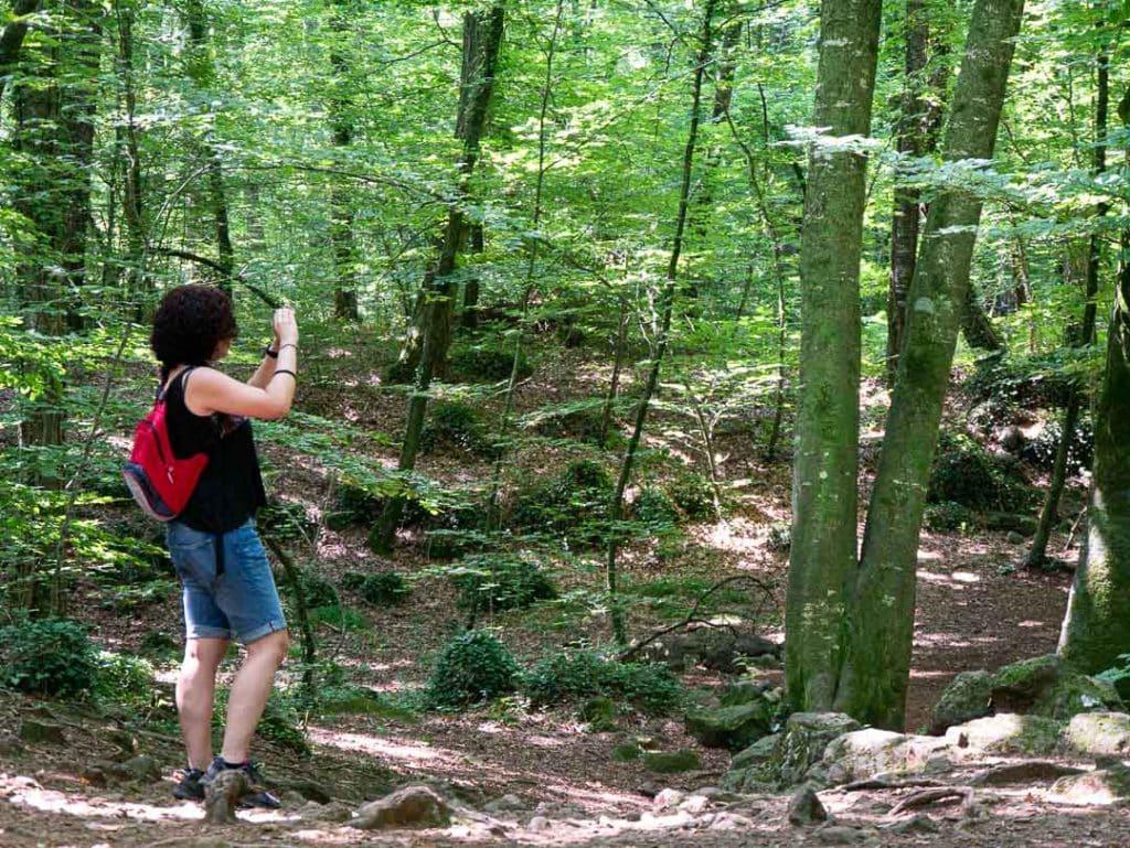 Bosque de hayas en la Garrotxa, Cataluña