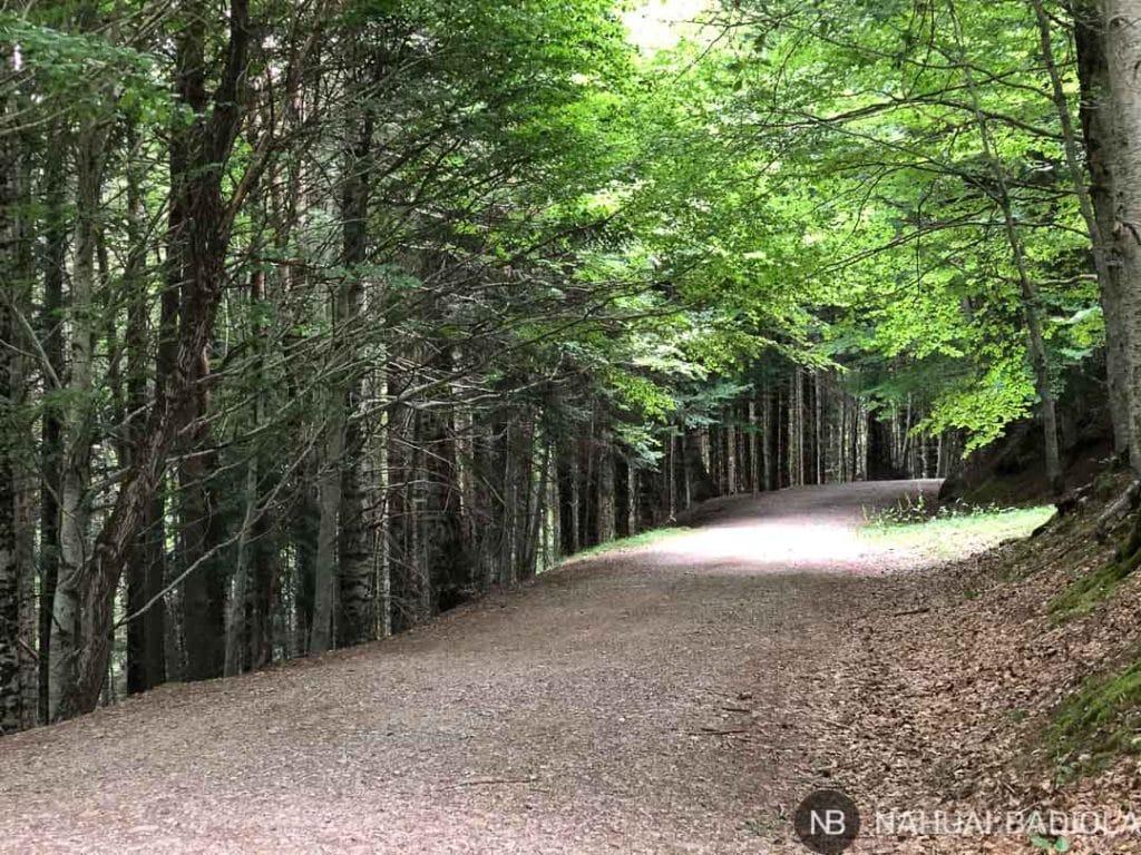 Camino fácil por la Selva de Oza