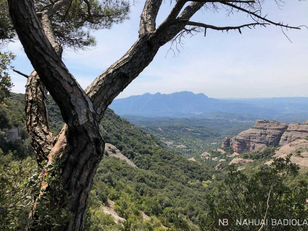 Vista de Montserrat tras un pino